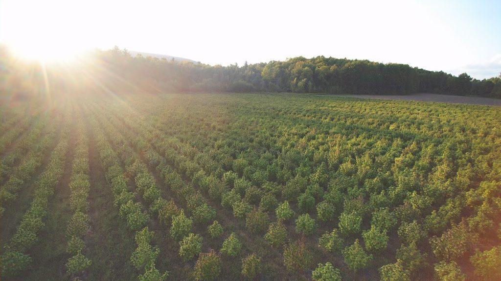 hemp manufacturing process