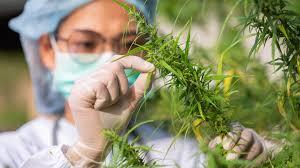 hemp based cbd manufacturing