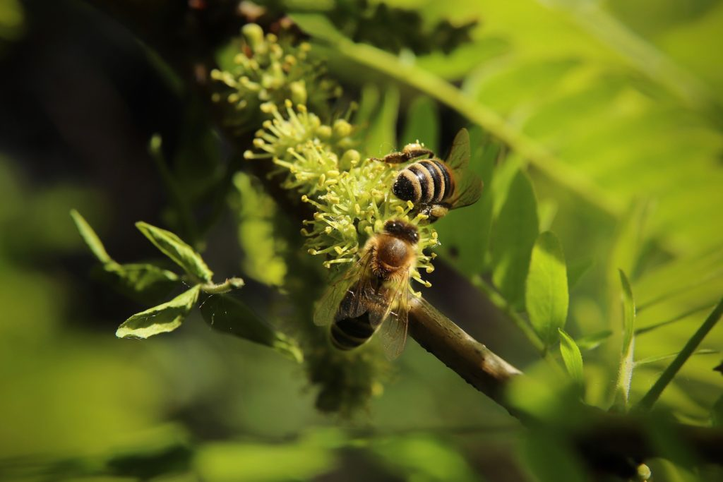 could hemp save bee pic 2