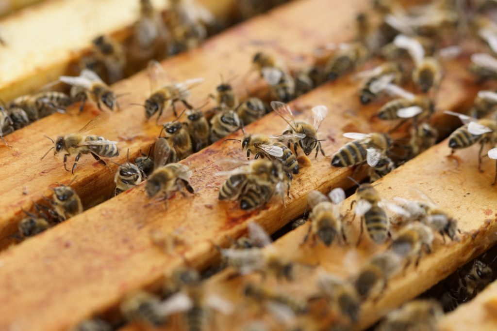 could hemp save bee pic 3