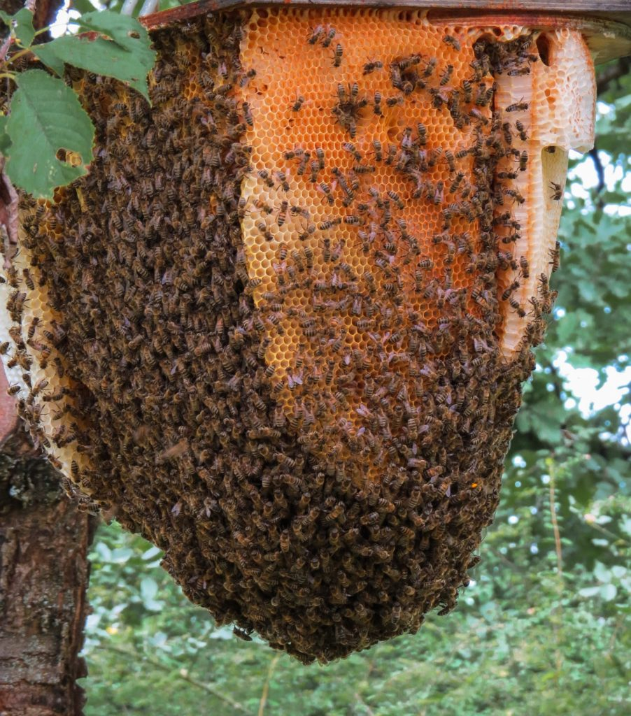 could hemp save bee pic 5