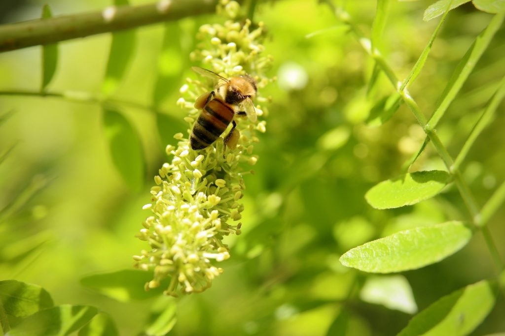 could hemp save bee pic 6