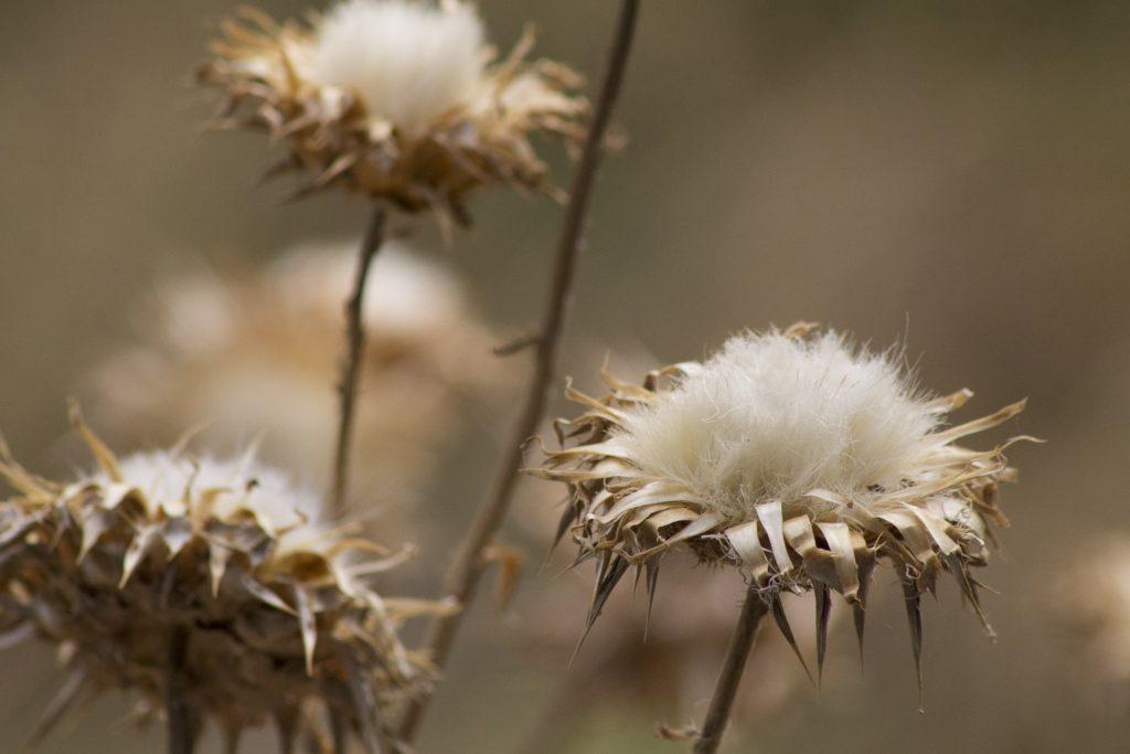 hemp vs cotton pic 2