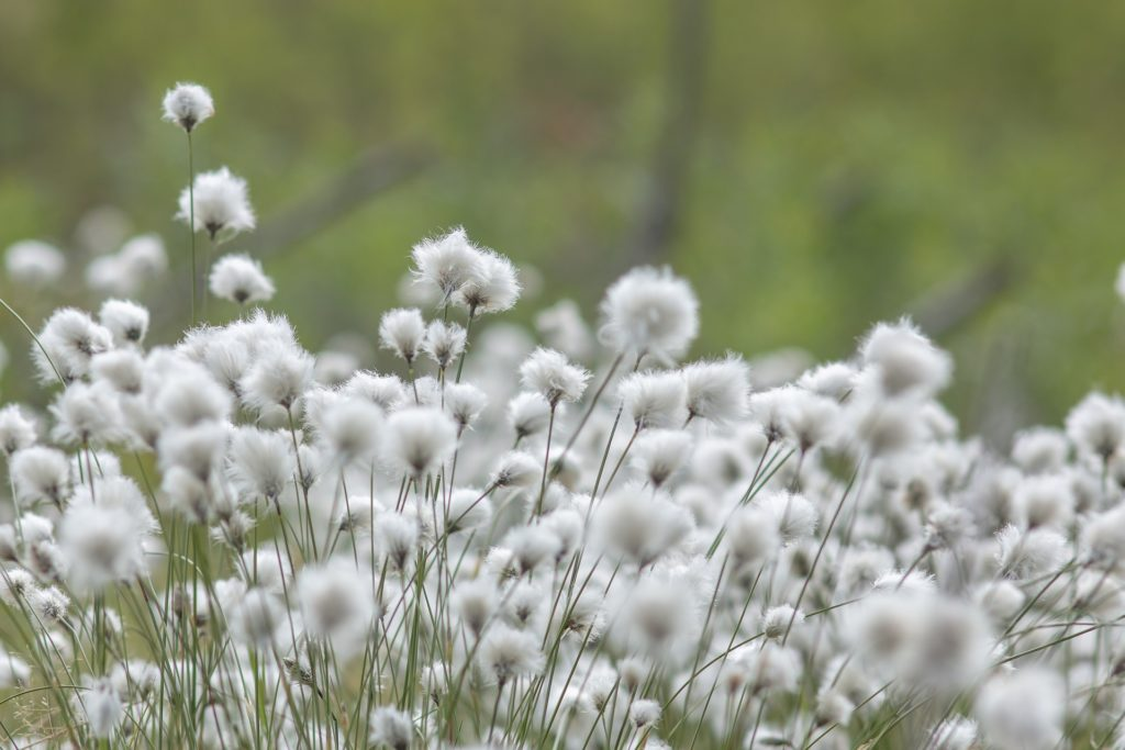 hemp vs cotton pic 3