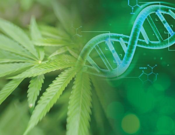 Specialty Cannabinoids Evolution