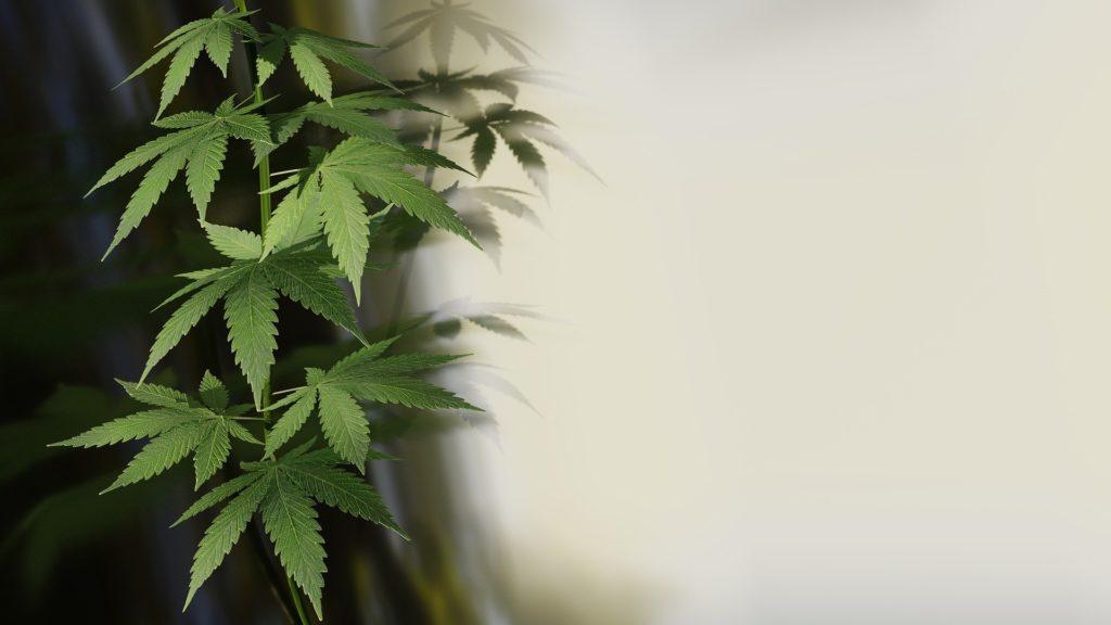 specialty cannabinoids hemp pic 1