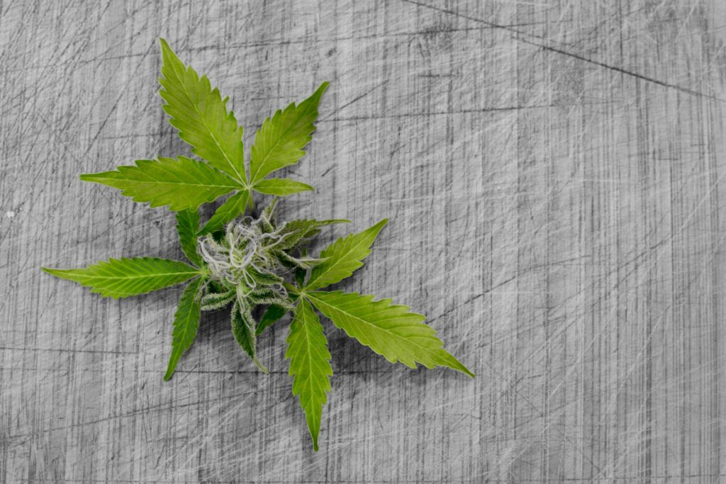 specialty cannabinoids hemp pic 6
