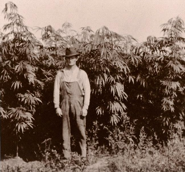 History of Hemp in the World
