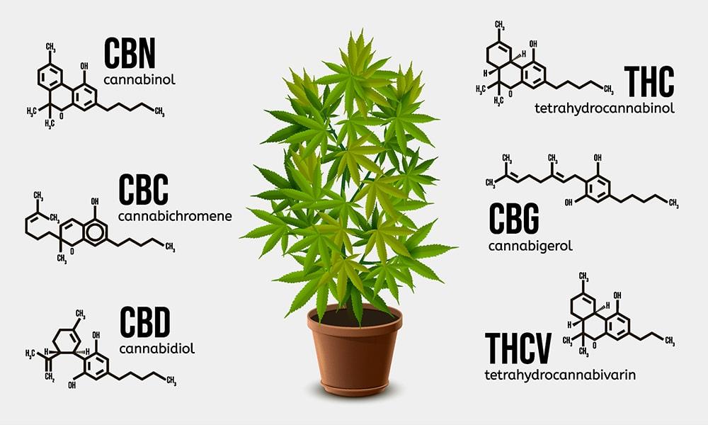 List of Minor Cannabinoids